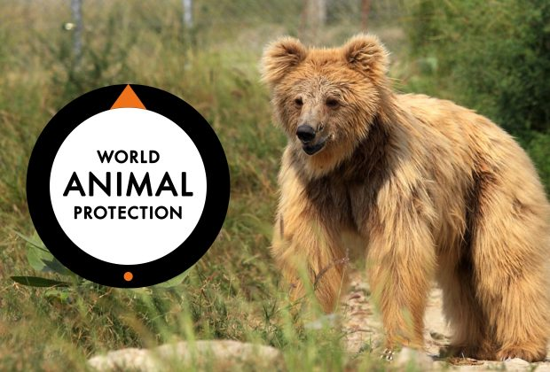 Here's How We Helped World Animal Protection Achieve its Mission to Tackle Animal Suffering on a Global Scale.